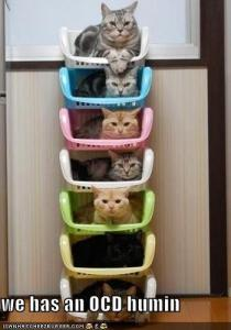 funny-pictures-stacked-cats-have-an-ocd-human